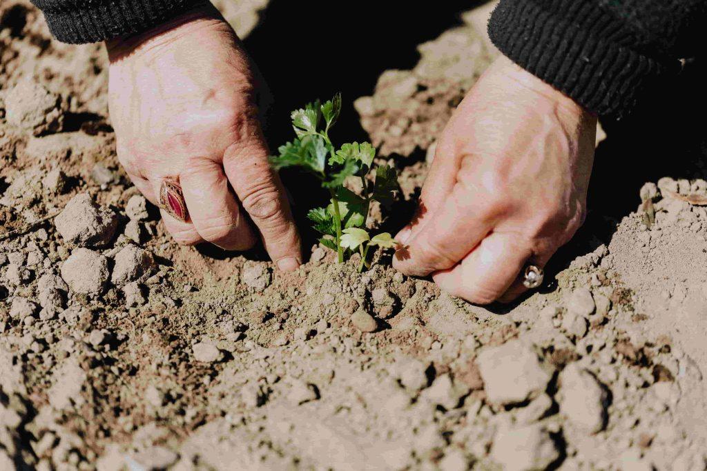 invertir en terrenos agrícolas